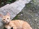 家附近的一只流浪的橘猫弟弟