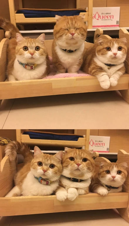 萌萌哒的可爱小橘猫